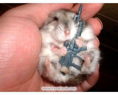 gun gerbil