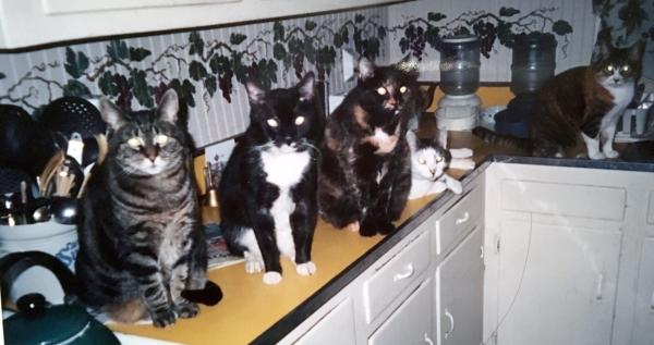 Cat Crew