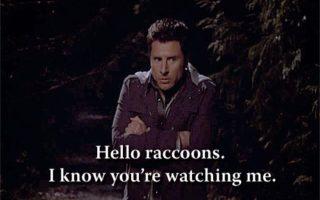 Crazy Like A Fox (Or A Raccoon?)